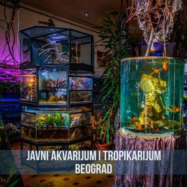 Javni akvarijum petface