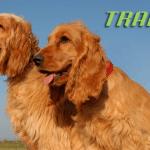 TRAINER: Posebna linija namenjena psima koji imaju problema sa radom bubrega!