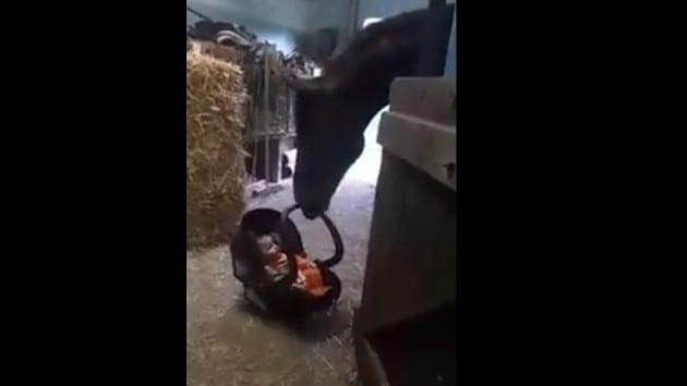 Konj dadilja petface
