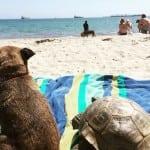 NAJBOLJI DRUGARI: Pas i kornjača se ne odvajaju nijednog trenutka!
