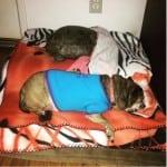 Pas i kornjača petface