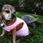 Pas i kornjača petface4 - Copy
