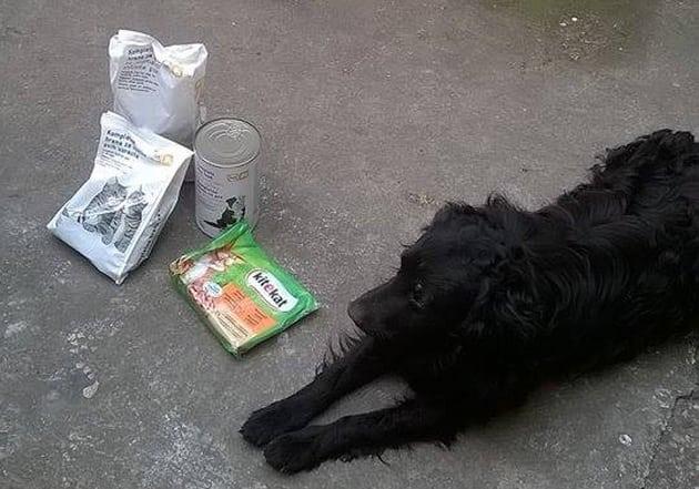banka hrane za napuštene pse petface