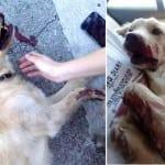 STRAVA U PODGORICI: Vlasnica šipkom brutalno pretukla psa!