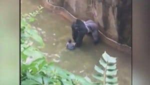gorile petface