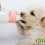 PERSONAL TRAINER: Sve o ishrani štenaca na jednom mestu!