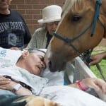Dva konja su prevalila 250 kilometara kako bi videla svog trenera na samrti!