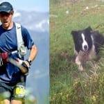 Pas rase border koli spasao je svog vlasnika od medveda!