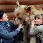 Jedna ruska porodica udomila je medveda pre 23 godine, a oni i danas žive zajedno!