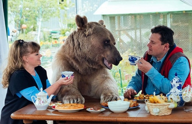 medveda petface