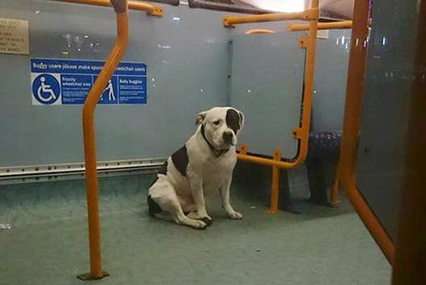 ostavljen u autobusu petface