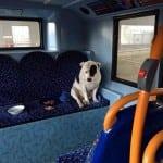 Iako je ostavljen u autobusu, prča o ovom psu ima SREĆNI KRAJ!
