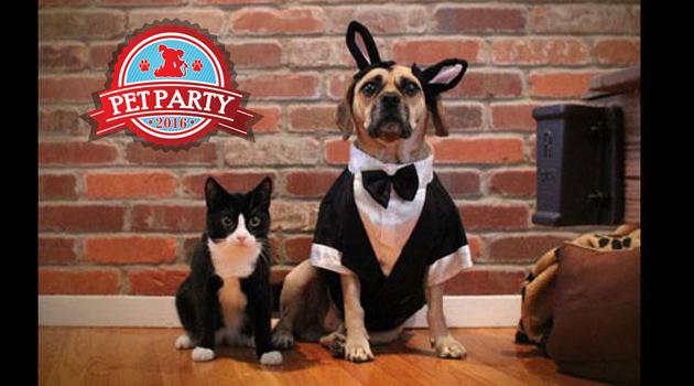 PET PARTY petface