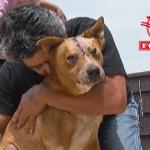 Nakon saobraćajne nesreće, čovek koji je višestruko povređen, otišao je prvo da potraži svog psa!