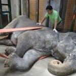 CEO ŽIVOT SAMA: Najusamljenija slonica na svetu uginula u 69. godini!