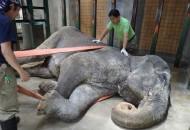 slonica petface
