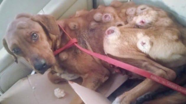 neuhranjeni pas petface