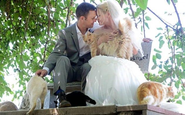 NESTVARNO  Ovaj par se venčao u skloništu sa 1.100 napuštenih mačaka! 35a0628ac4c