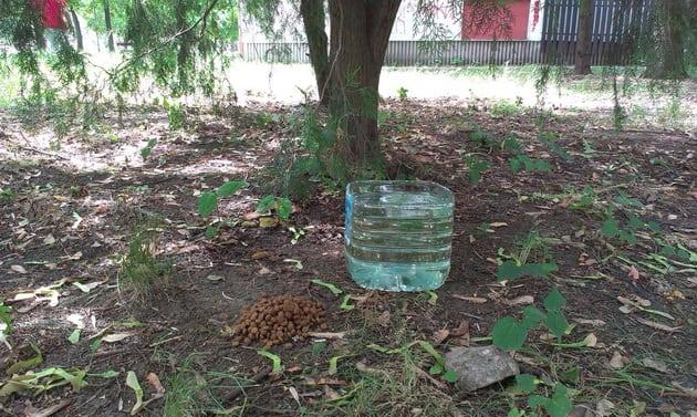vodu napuštenima petface