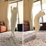 Da li ste spremni da se zaljubite u mačku koja igra balet?