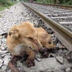 Ovom štenetu voz je zgnječio noge, a zahvaljujući svojim spasiocima on živi život punim plućima!