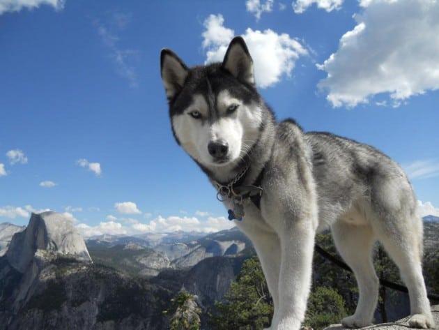 10 rasa pasa koje se najviše linjaju petface