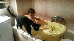 mačak Nebojša petface