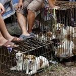 PROTEST U BEOGRADU: Zaustavimo festival psećeg i mačijeg mesa u Kini!