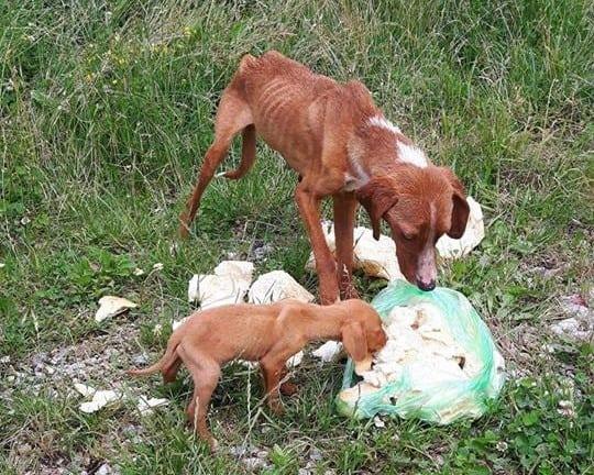 Mama i njeno štene petface