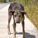 PRETVORIO SE U KAMEN: Napušteni pas bojao se ljudskog dodira. A sada… (VIDEO)