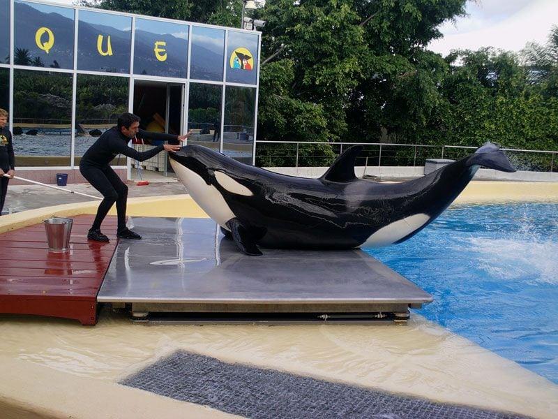 Orka petface