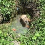 I HEROJ I PRIJATELJ: Policajac spasio psa iz septičke jame, pa ga UDOMIO!