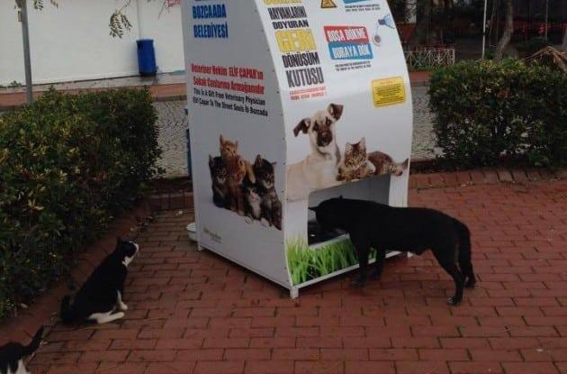 hranu za ulične pse petface