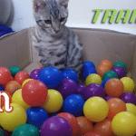 Mačkama je za sreću potrebno malo – ukusna Trainer hrana i kartonska kutija puna loptica!