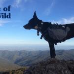 Ovaj pas heroj spasio je svoju vlasnicu nakon njenog pada litice!