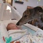 Preplašeni pas trkač shvatio je šta je ljubav tek kada je upoznao ovu bebu!