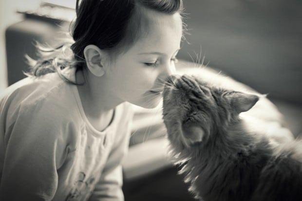 mačka voli petface