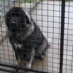 NOVI SAD: Šarplaninac, koji je izujedao devojčicu, vlasnički pas koji NIJE ČIPOVAN, NI VAKCINISAN!