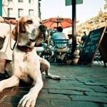 BUDVA: Demolirao plažni bar, jer mu nisu dali da uđe sa psom!