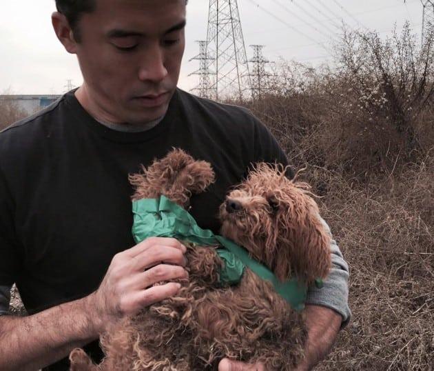 spašava pse petface