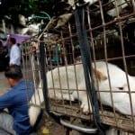 POBEDA: Volonteri jednog Udruženja uspeli su da spasu 34 životinje iz kaveza u Julinu!