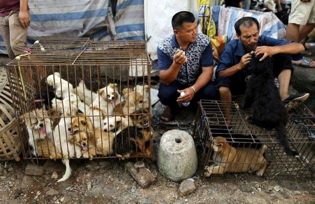spasu 34 životinje petface