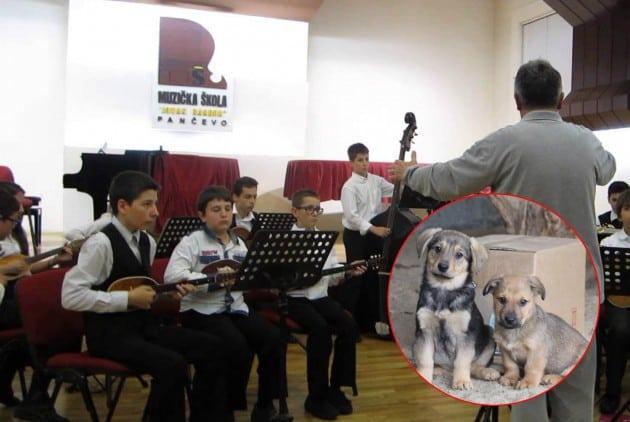 sviraju za napuštene pse petface