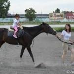 Proteklog vikenda održana je akcija prikupljanja novca za jedini azil za konje u Srbiji!
