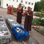 Monasi sa jednog ostrva otkupili su oko 300 kilograma jastoga, kako bi ih vratili ih u okean!