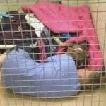 Volonterka jednog prihvatilišta leži pored psa Prisi i teši ga nakon operacije!