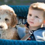 Dečak Frenki boluje od retke bolesti pluća, pa su njegovi roditelji nabavili psa koji će mu olakšati život!