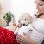Kako pripremiti psa na dolazak bebe?