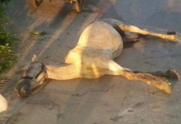 iznemoglog konja petface