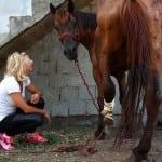 Kobila iz Surčina, bez jedne noge spasena, protiv vlasnika podneta krivična prijava!
